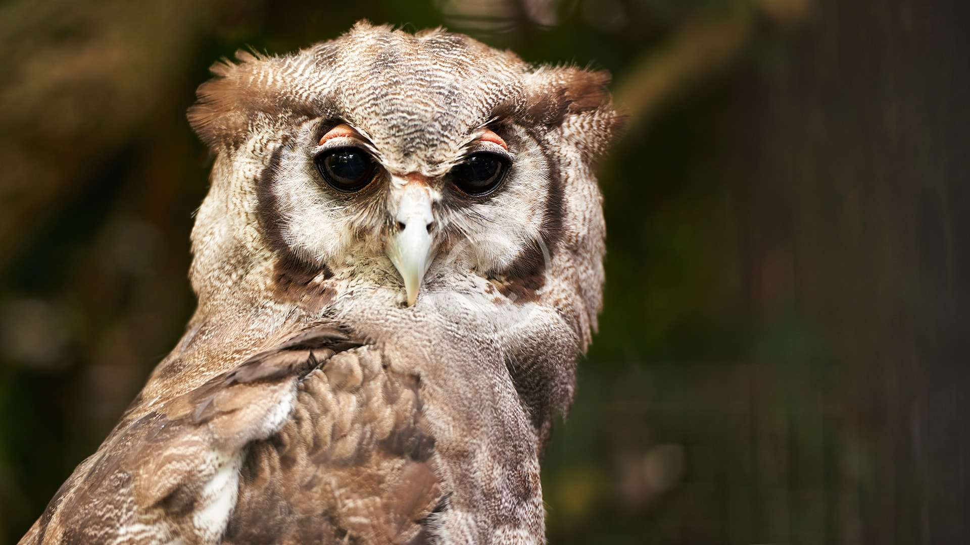 Donate to Support Owls